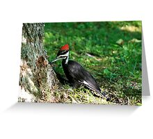 Young Pileated Woodpecker Greeting Card