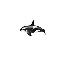Whale by Melissa Middleberg