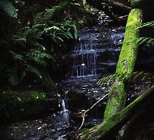 Myrtle Falls, South Hobart (#2) by Kelly McGill
