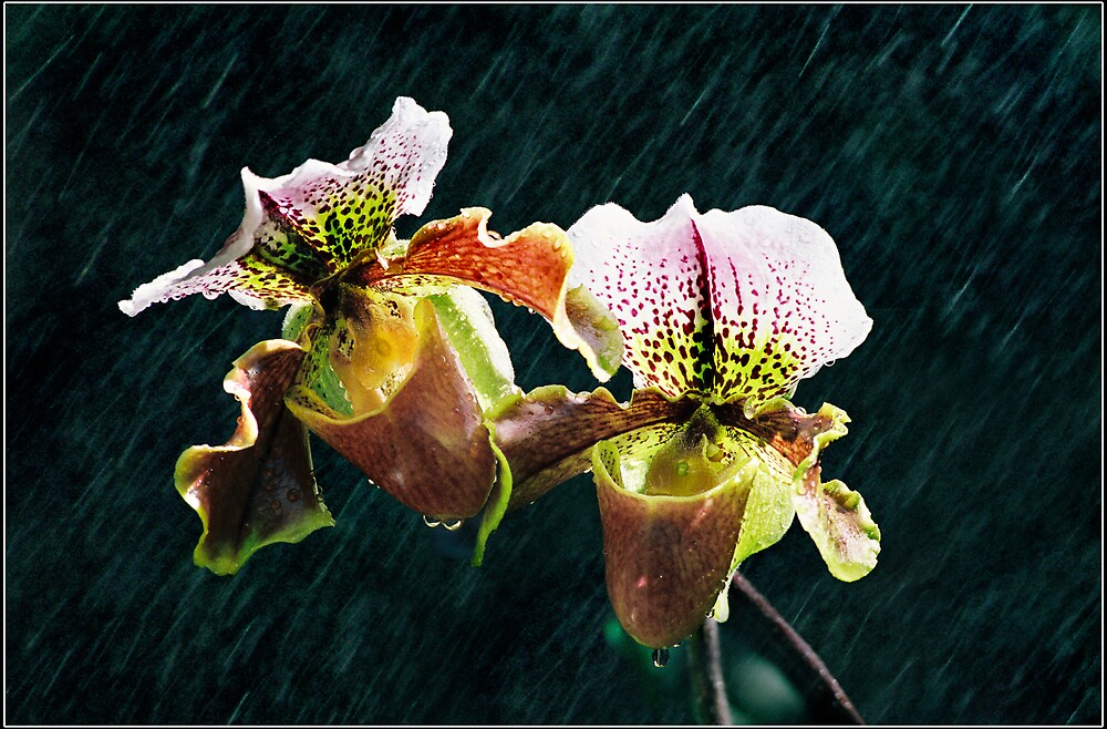 rainning in spring by leson