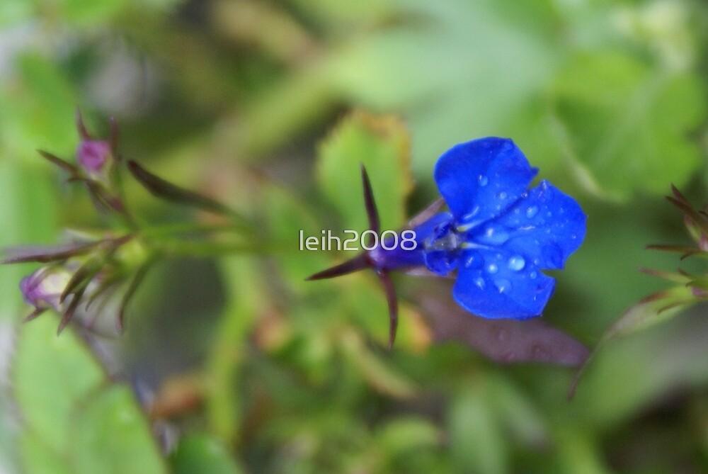 One; In my yard La Mirada, CA USA by leih2008
