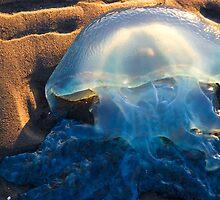 Jellyfish by Marianne