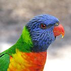 Rainbow Lorikeet by Marilyn Harris