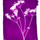 purple photogram by JennySmith