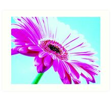 Shocking Pink Gerbera On Blue Sky Art Print
