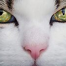 Cats Eyes by LisaRoberts