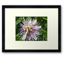 Passionate about Flowers Season 2 Framed Print