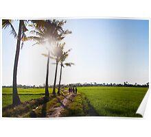 walking through the rice paddies Poster