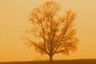 Misty Morning by InfinityRain