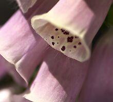 Foxglove by Joy Watson