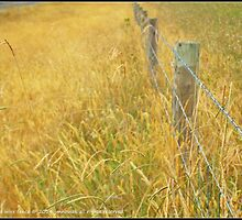 Barbed wire fence by jmnowak