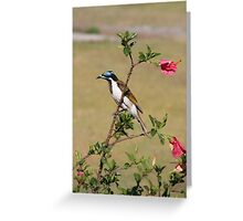 Honey Eaters Greeting Card