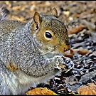 """"""" Bright eyed & Bushy tailed"""" by Malcolm Chant"""