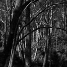 Scary Trees- Lobethal Bushland Park by Ben Loveday