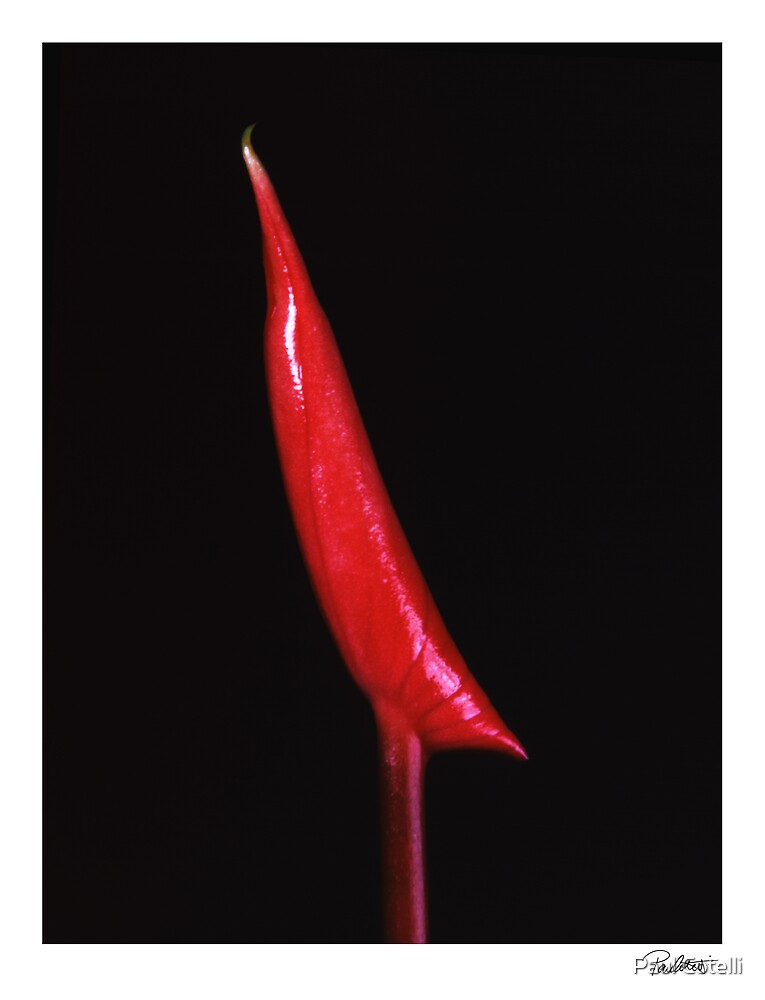 "'Red Lilly' from the series ""Inner Bloom"" by Paul Cotelli"