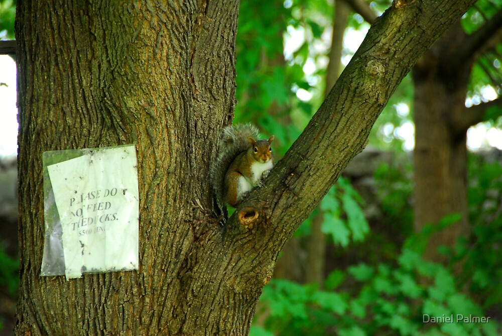 Feed The Squirrel Instead by Daniel Palmer