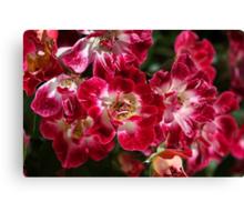 Rose Cluster Canvas Print