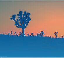 California Desert by juliabohemian