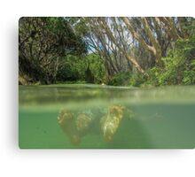Floating down Eli Creek Metal Print