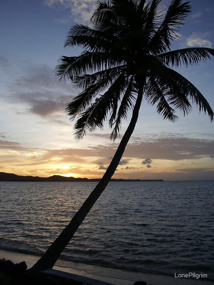 Palm Tree by LonePilgrim