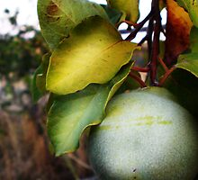 Pear by Katherine Kakafikas