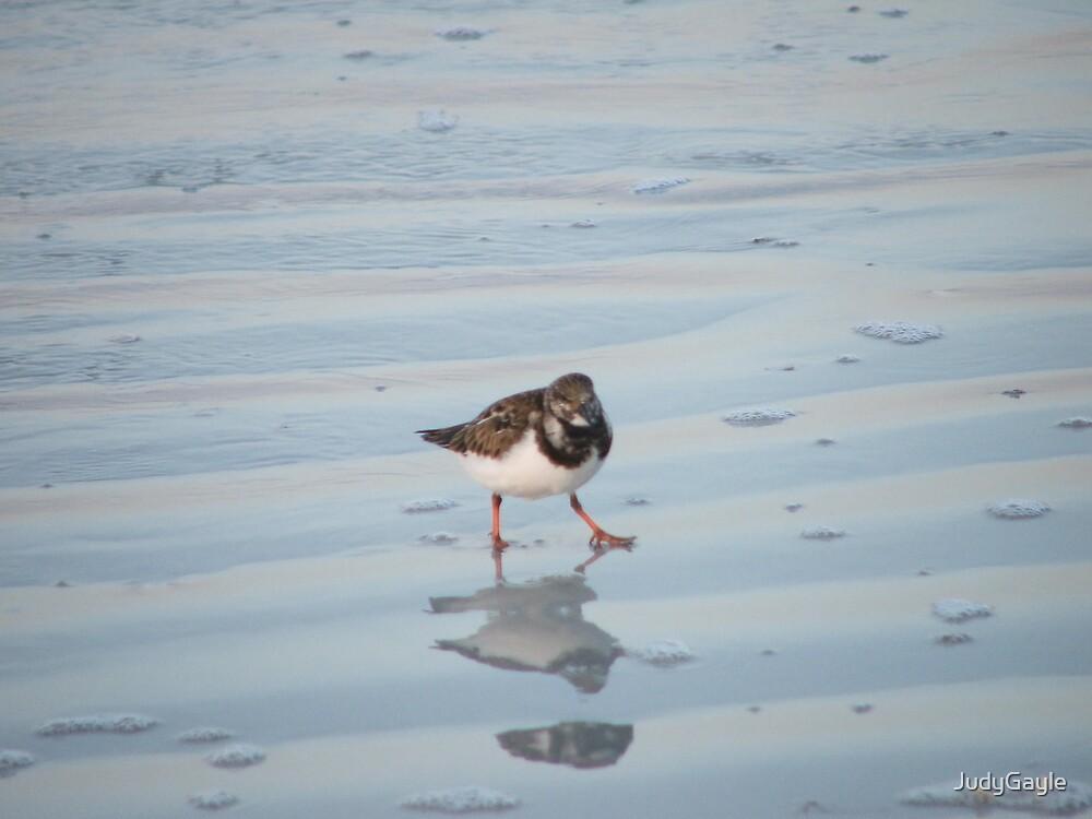 Bird on the Beach by Judy Gayle Waller