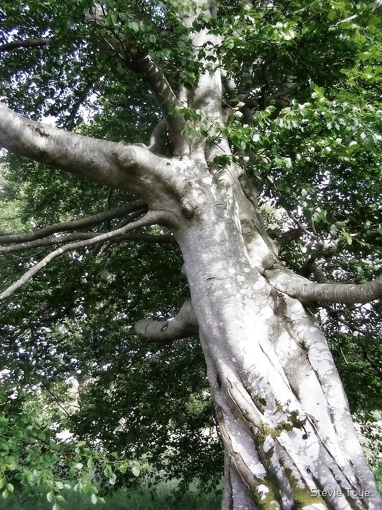 Old Tree by Stevie Toye