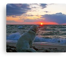 Embracing the moment Canvas Print