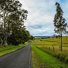 Country Roads - Out Near Mt Barney by Marian Moore