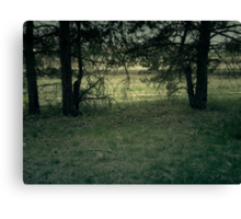 Pine Forest 2 Canvas Print