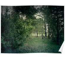 Pine Forest 4 Poster