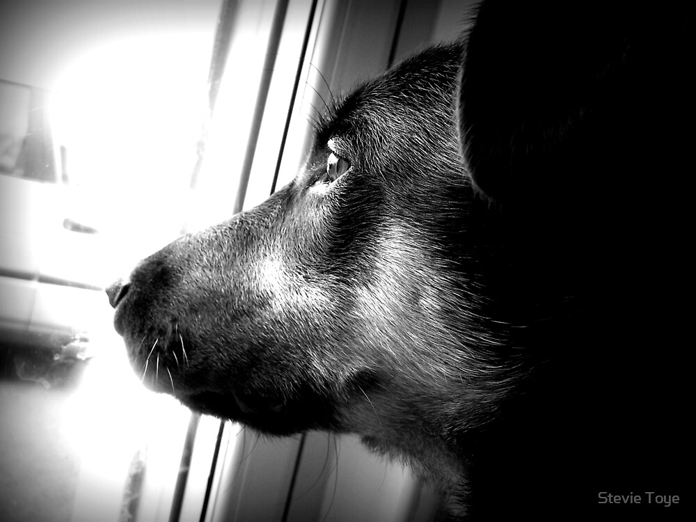 Waiting for the Sunshine by Stevie Toye