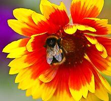 Bee at work by Steve plowman