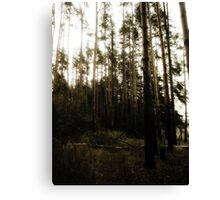 Vintage Photo of Pine Forest Canvas Print