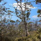 Orford bush, almost obscuring the view by gaylene