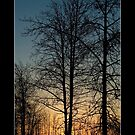 Fairbanks Sunset IV - Cool Stuff by Maria A. Barnowl