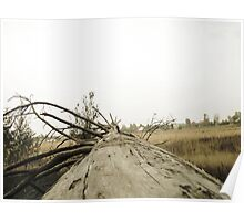 Vintage Photo of Pine Forest 3 Poster