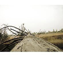 Vintage Photo of Pine Forest 3 Photographic Print