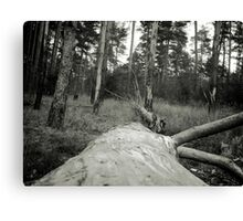 Vintage Photo of Pine Forest 4 Canvas Print