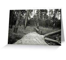 Vintage Photo of Pine Forest 4 Greeting Card
