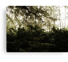 Vintage Photo of Pine Forest 6 Canvas Print