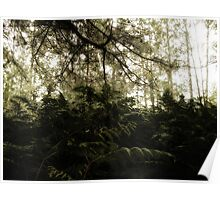 Vintage Photo of Pine Forest 6 Poster