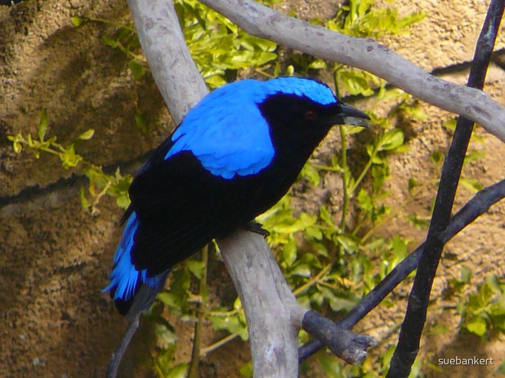 Tropical Bird by suebankert