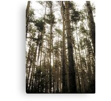 Vintage Photo of Pine Forest 7 Canvas Print