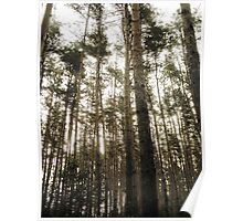 Vintage Photo of Pine Forest 7 Poster