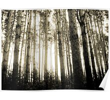 Vintage Photo of Pine Forest 8 Poster