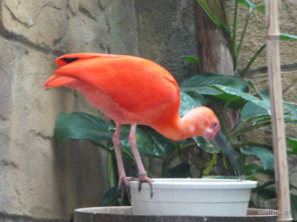 Tropical Bird 3 by suebankert