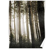 Vintage Photo of Pine Forest 9 Poster