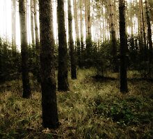 Vintage Photo of Pine Forest 10 by AnnArtshock