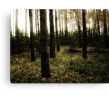 Vintage Photo of Pine Forest 10 Canvas Print